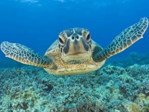 Świat na grzbiecie żółwia2