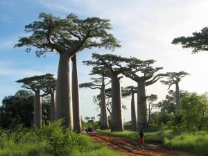 Baobaby1