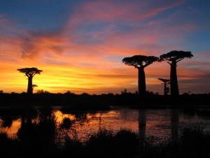 Baobaby2