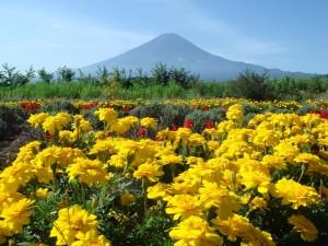 Fuji- piękno uśpionego wulkanu3