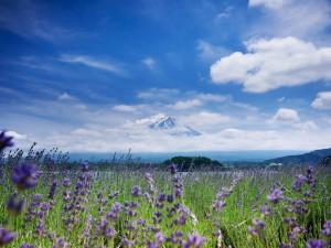Fuji- piękno uśpionego wulkanu6