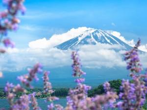 Fuji- piękno uśpionego wulkanu7