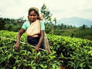 Herbaciane plantacje7