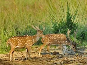 Królewski Park Narodowy Chitwan