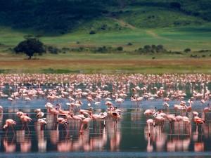 Krater Ngorongoro6