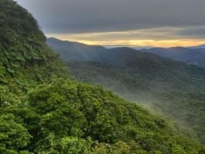 Las chmurowy- Monteverde5