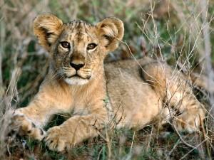 Legendarne Serengeti