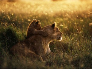 Legendarne Serengeti1