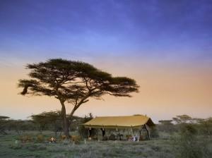 Legendarne Serengeti13