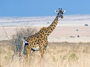 Legendarne Serengeti15