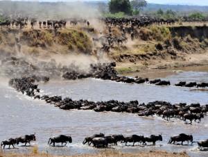 Legendarne Serengeti16