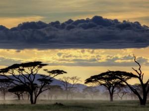 Legendarne Serengeti17
