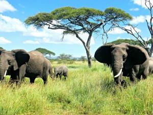 Legendarne Serengeti4