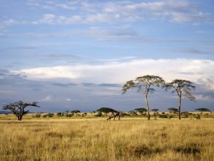 Legendarne Serengeti5