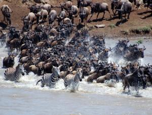 Legendarne Serengeti6