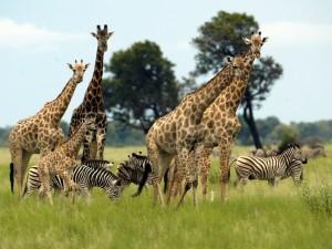 Legendarne Serengeti8