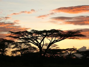 Legendarne Serengeti9