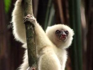 Lemury2