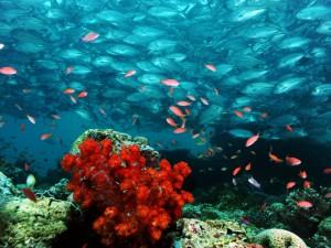 Nurkowanie na Bora Bora i Thaiti2