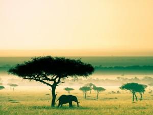 Pożegnanie z Afryką
