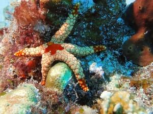Podwodny świat9