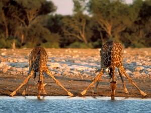Safari w Etosha i Caprivi10