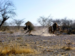 Safari w Etosha i Caprivi6