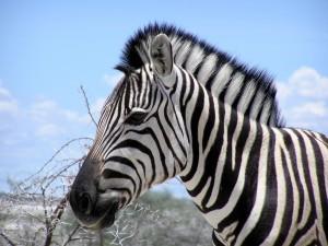 Safari w Etosha i Caprivi9