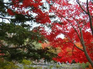 Starożytna stolica Gyeongju1