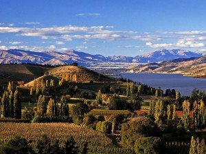 Winnice Central Otago