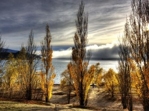 Winnice Central Otago2