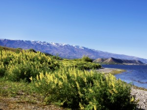 Winnice Central Otago3