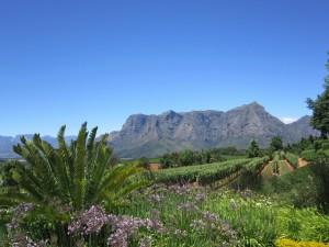 Winnice Stellenbosch4
